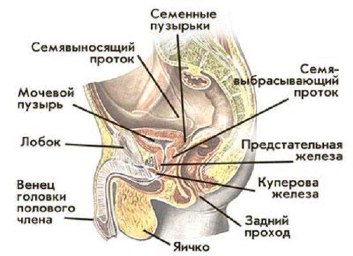 Симптоматика мужского бесплодия