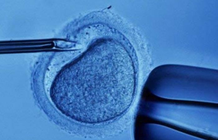 Оплодотворение яйцеклетки до подсадки
