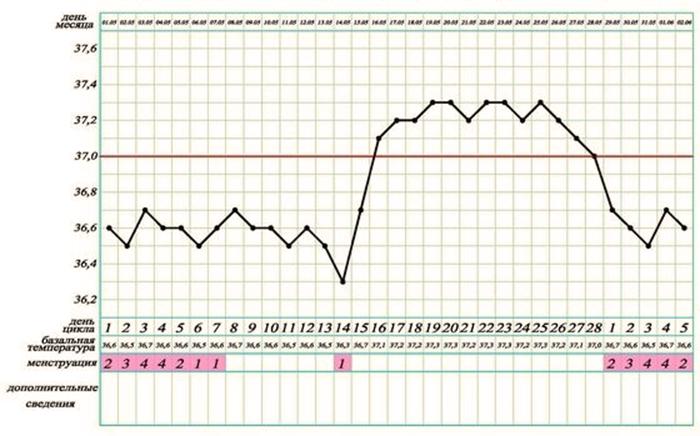 Норма базальной температуры - отображена красной линией