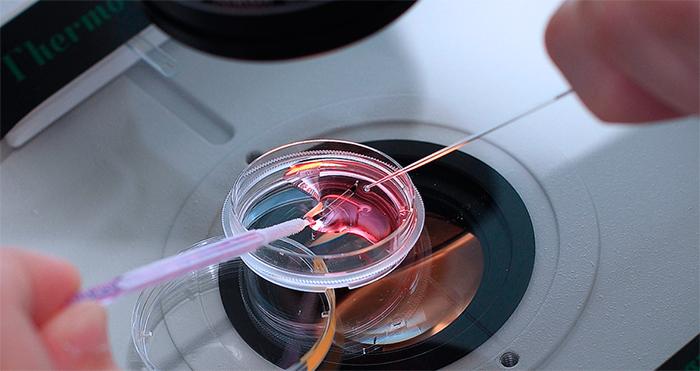 Оплодотворение эмбриона в клинике Центр Репродуктивной Медицины