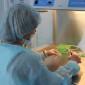 Исследование эмбрионов в клинике семейной медицины