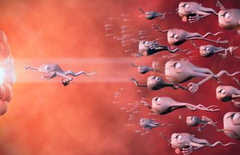 Как улучшить сперму при ЭКО