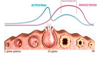 Схема нормы гормонального уровня прогестерона