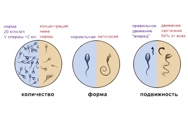 Показатели нормы спермы у мужчины