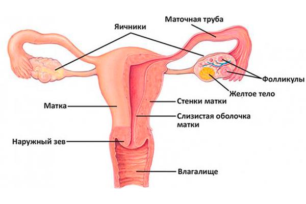 """Дисфункция яичников - одна из причин применения """"Утрожестана"""" при ЭКО"""