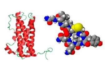 Как действуют гормоны пролактин и окситоцин