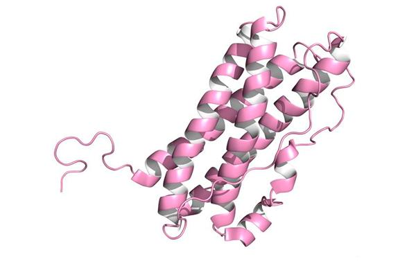 Химическая структурная формула Пролактина