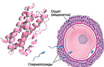 Как пролактин влияет на зачатие