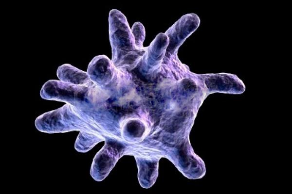 Микроорганизм Макрофаг
