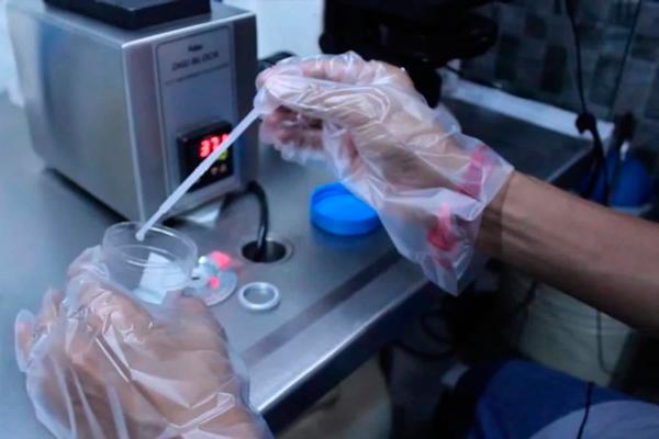 Спермограмма в которой обнаруживаются макрофаги