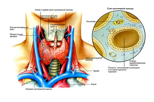 Повышение концентрации пролактина в следствии гипотиреоза