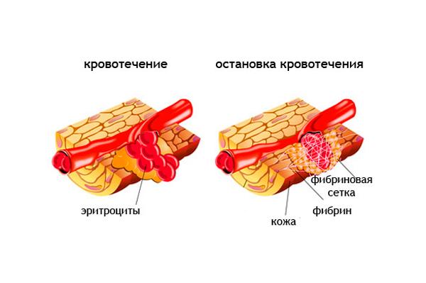Схема работы Фибриногена