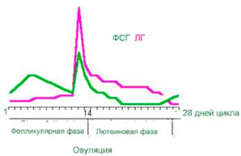 Соотношение гормонов ЛГ и ФСГ в женском организме