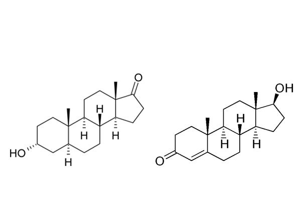 Тестостерон и андростерон, как представители андрогенов