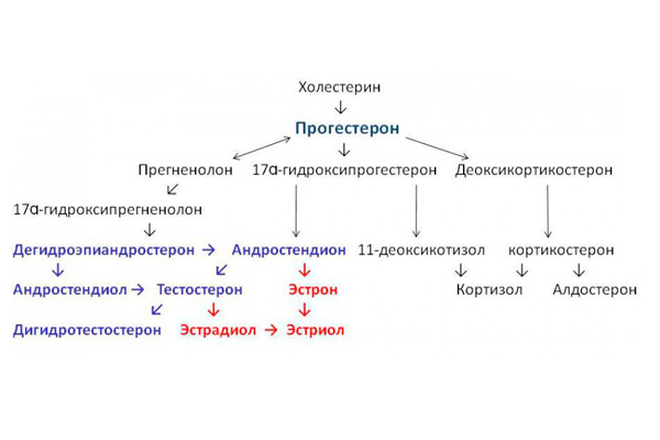 Синтез мужских гормонов из прогестерона