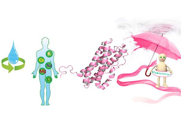 Действие пролактина на иммунитет и участие в регулировке водно-солевого обмена