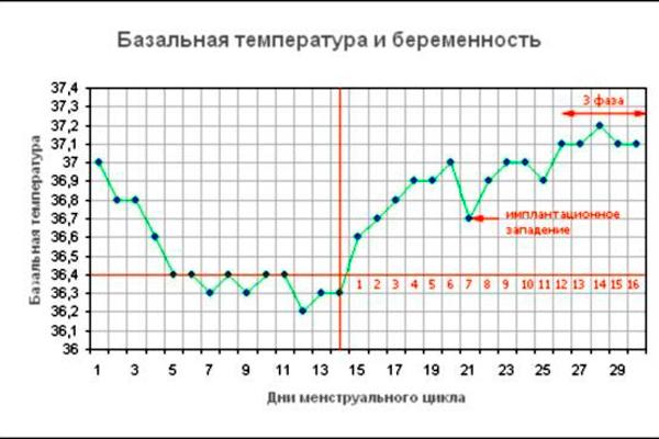 График базальной температуры для диагностирования беременности