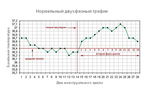 Нормальный двухфазный график базальной температуры