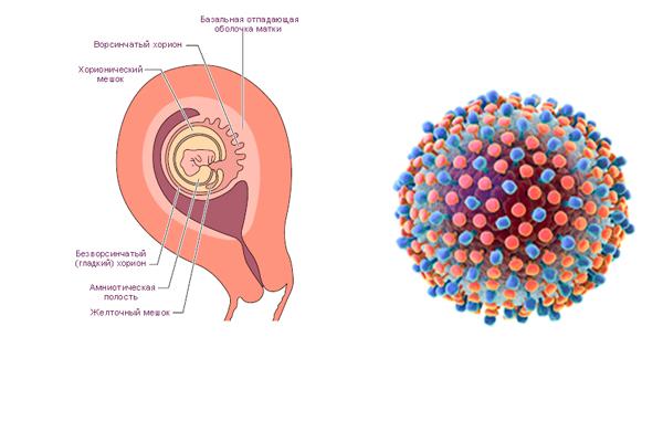 Пагубное воздействие вируса Гепатита С на беременность