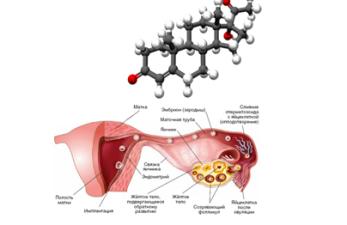 Нормы показателя прогестерона в лютеиновой фазе