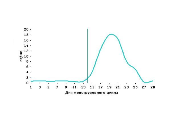 Изменение концентрации прогестерона в зависимости от фазы менструального цикла