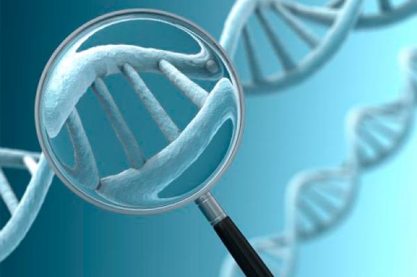 Применение донорских яйцеклеток в случае генетических заболеваний