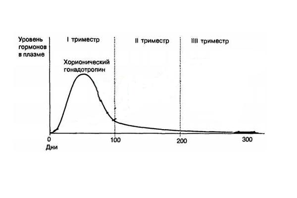 Изменение концентрации ХГЧ при нормальной беременности
