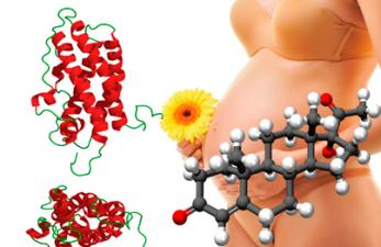 Взаимосвязь прогестерона и пролактина