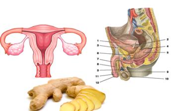 Имбирь при женском и мужском бесплодии