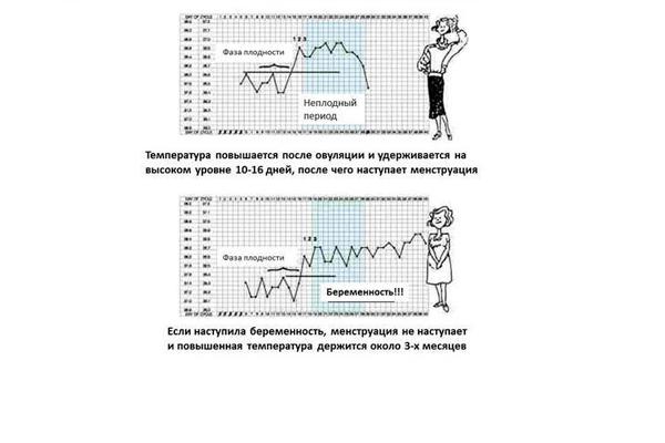 Выявление беременности по графику базальной температуры