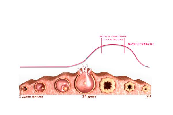 Норма прогестерона для успешной имплантации