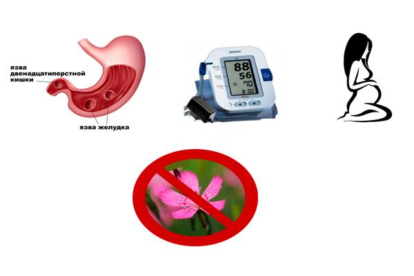 Запрет на употребление маточной гвоздики при беременности, язве и гипотонии