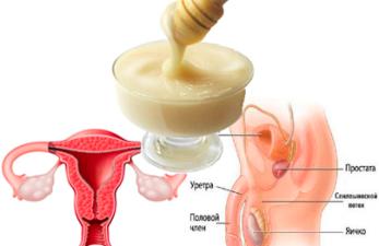 Маточное молочко при бесплодии: способы применения и действенные рецепты