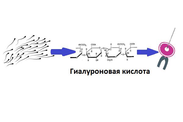Схема проведения процедуры ПИКСИ