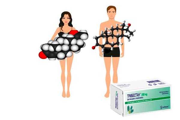 Стимуляция выработки стероидных гормонов Трибестаном у женщин и мужчин