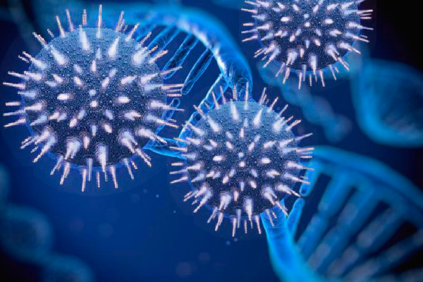Бактерия герпеса