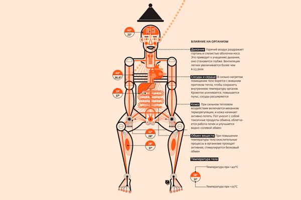 Польза от бани для организма человека