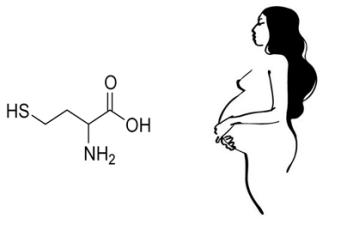 gomocistein-pri-beremennosti
