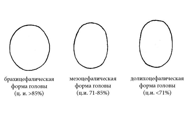 Виды форм головы плода