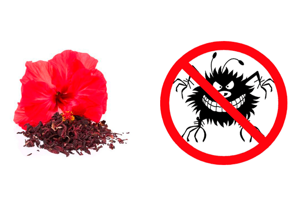 Уничтожение микробов с помощью употребления чая каркаде