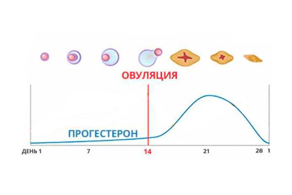 График изменения уровня прогестерона в зависимости от дня цикла