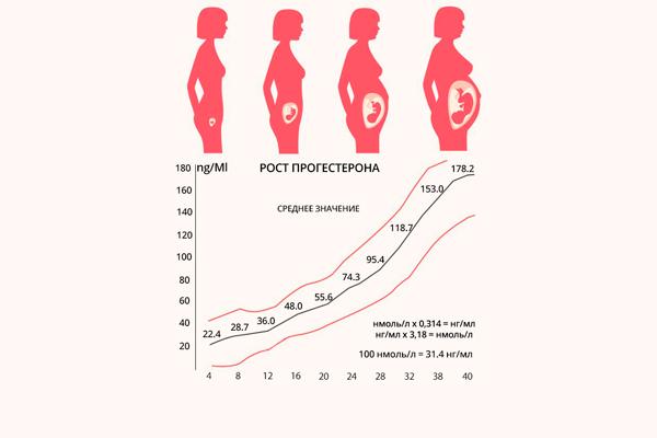 График уровня прогестерона в период беременности