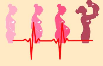 Пульс при беременности на 1, 2, 3 триместре: нормальные показания и отклонения от нормы