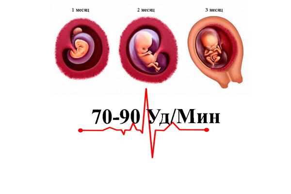 Нормальные показатели пульса на первом триместре беременности