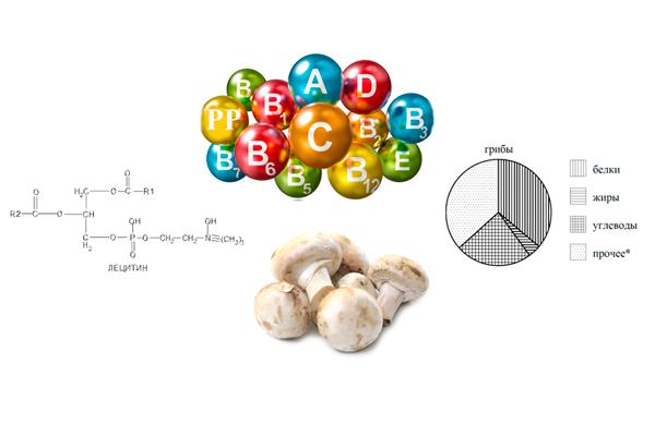Полезные вещества и состав грибов