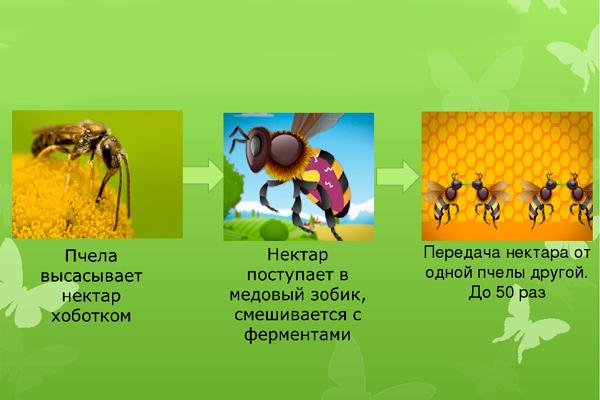 Схема производства меда пчелами