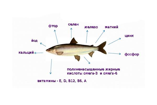 Полезные вещества в составе рыбы