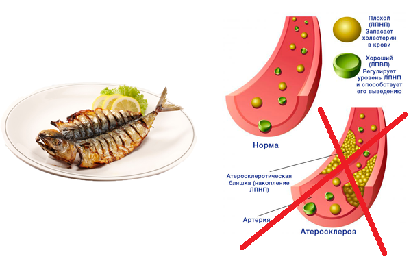 Предотвращение накоплению плохого холестерина при употреблении рыбы