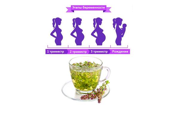 Употребление чая с чабрецом на разных триместрах беременности