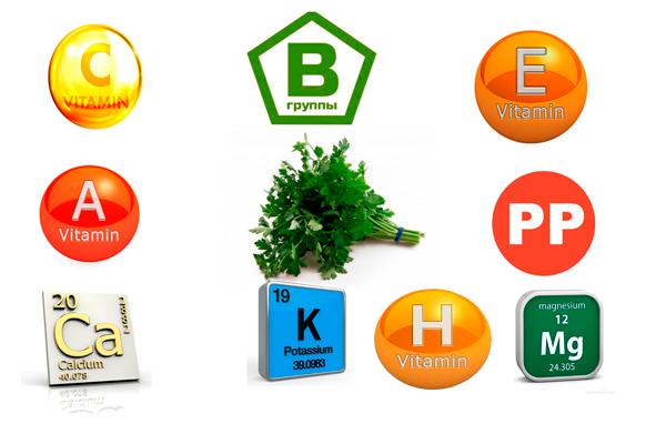 Полезные вещества в составе петрушки